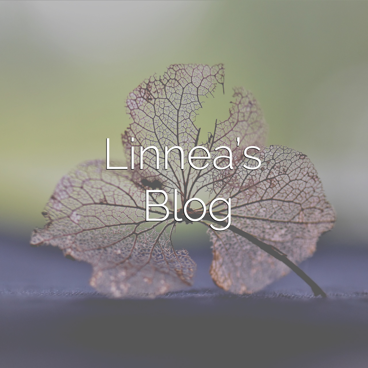 A Mindful Life | Blog