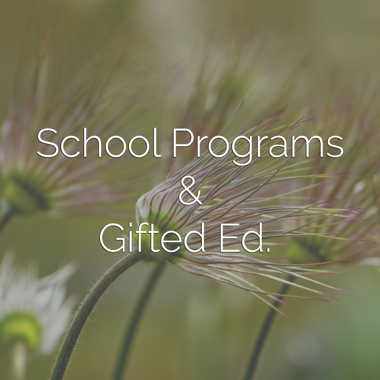 A Mindful Life | School Programs & Gifted Education